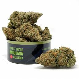 Buy Gelato Cannabis Online in Vancouver